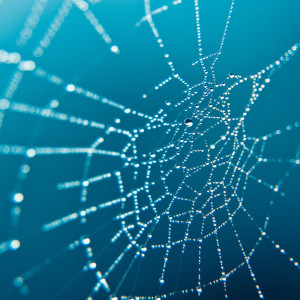 spider-web-wallpaper-2